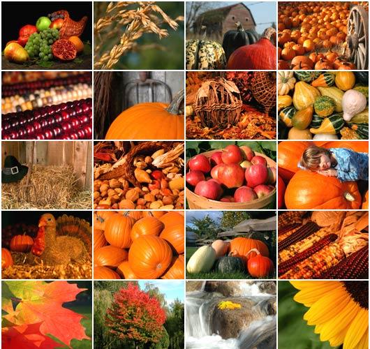 Thanksgivingbb